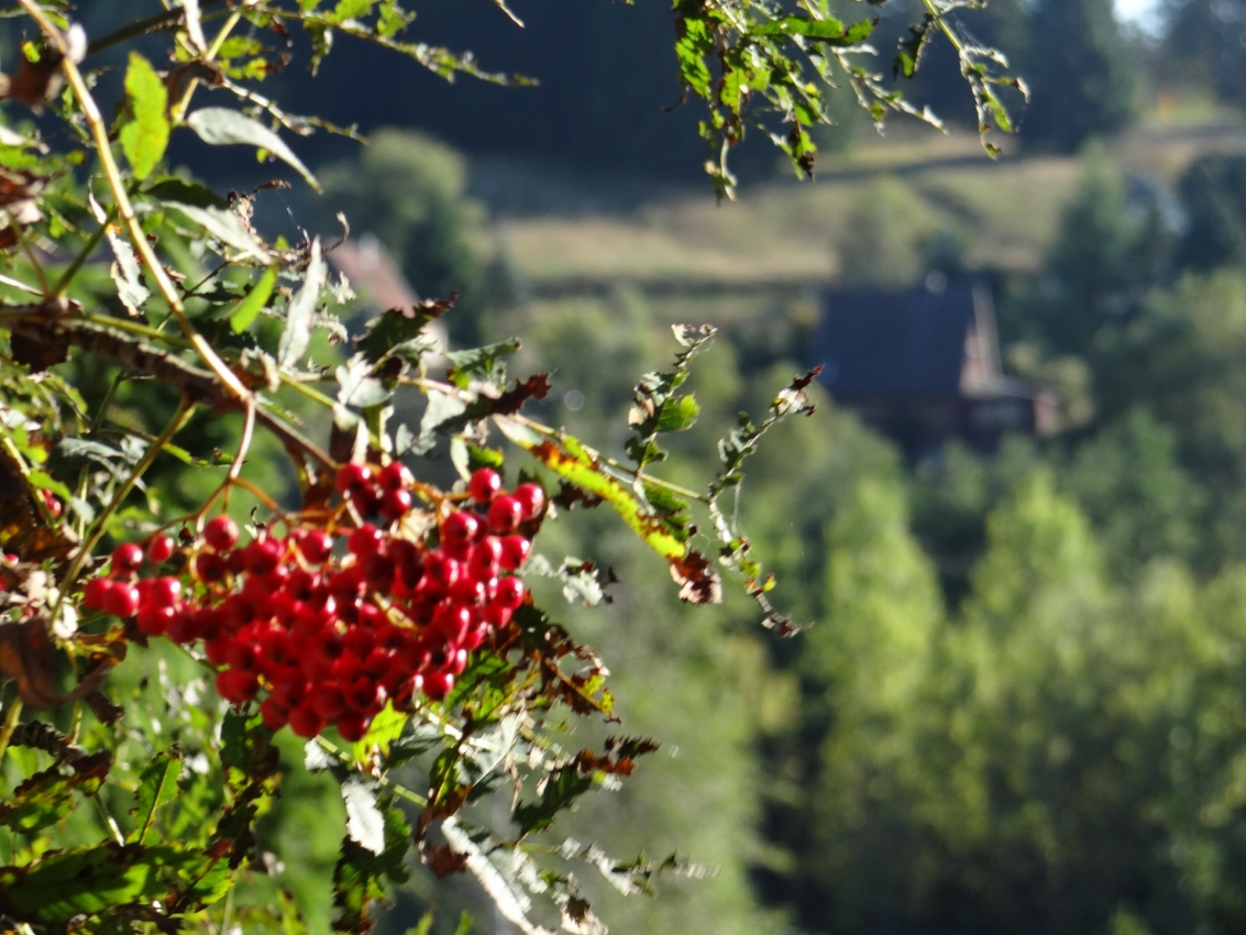Altenbrak im Harz Bodetal